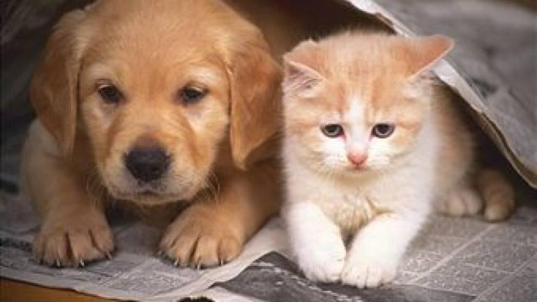 Društvo za zaščito živali Pomurja – Novice pomlad 2021